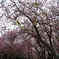 Tainan5211.jpg