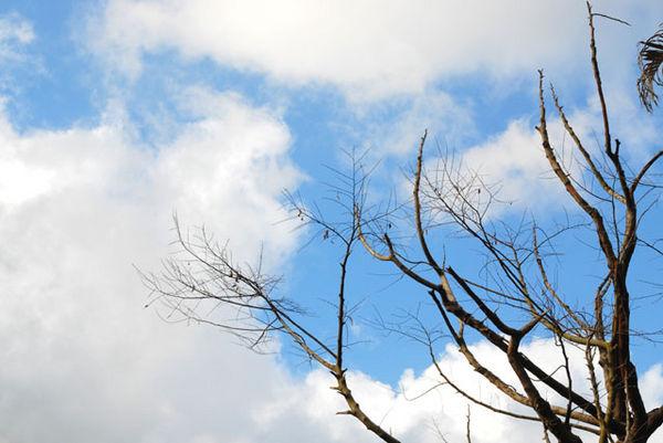 林山田的枯枝與天空
