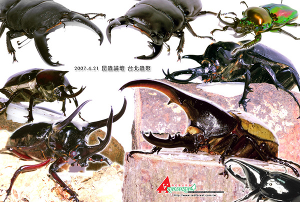 昆蟲論壇蟲聚海報