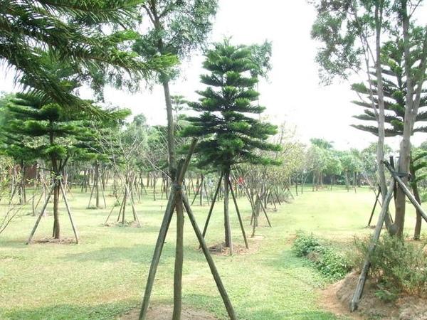 二千坪的大草皮,全都是小樹木,沒什麼花園造景
