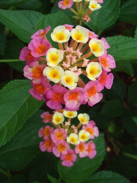 可愛花朵,色彩超鮮豔,漂亮