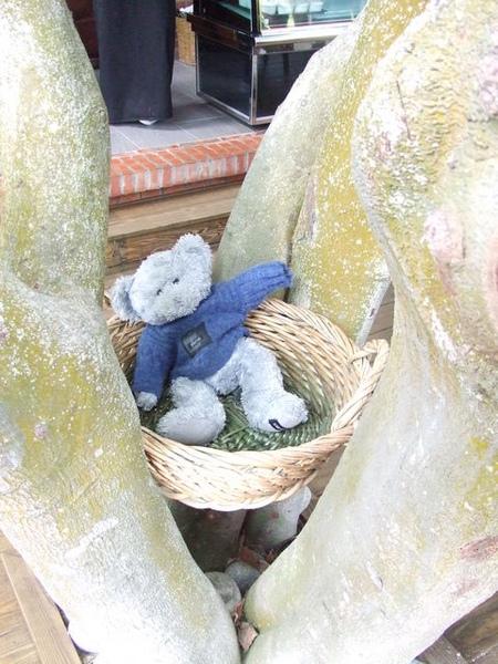 有隻可愛的熊熊放在大樹中間耶