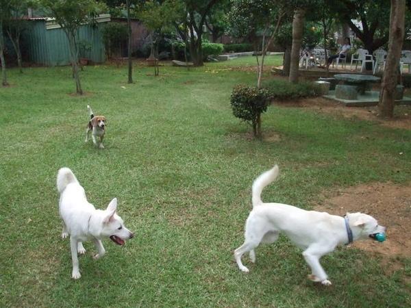 後來又有好幾隻狗狗出現,大家完成一團