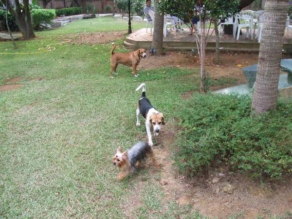 可愛狗狗跑成一堆