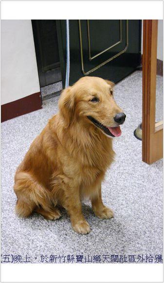 是誰家的狗狗?快把牠領回家吧