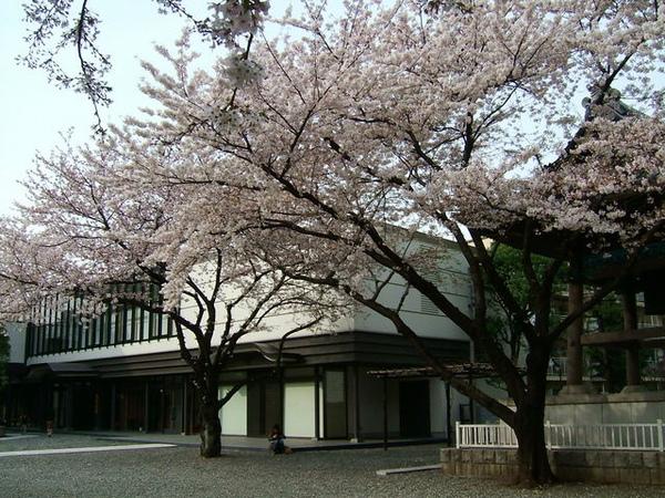 悠閒的坐在櫻花樹下做自己事情的日本妹妹