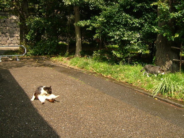 可愛貓咪也跑出來曬太陽,很悠哉且大剌剌的在石子路上整理皮毛