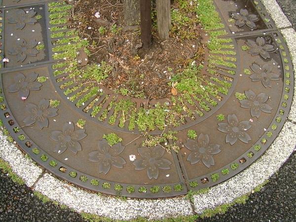 連保護樹木的鐵蓋上都是櫻花紋