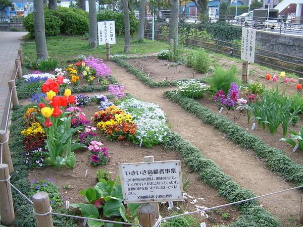 這可愛小花園,都是附近高齡志工們的心血,真的可愛