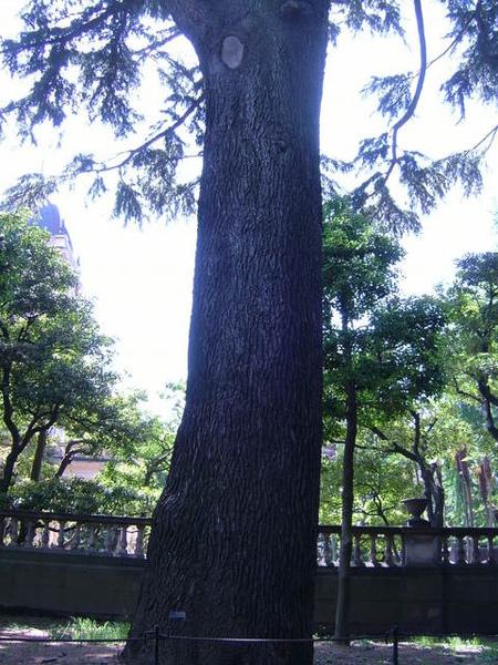 另一棵默默守護古老宅房的大樹