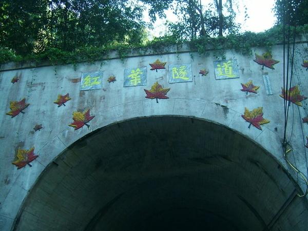 這張照得很清楚,可愛的隧道壁,充滿了紅葉