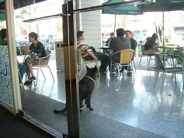 門口有隻很乖巧的小黑狗,不知有沒有主人?