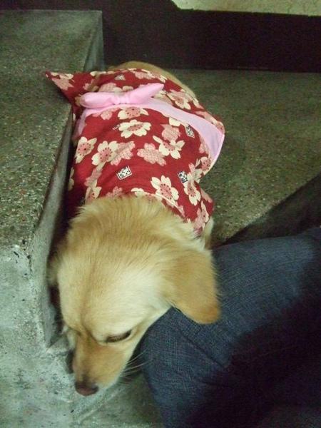 小熊妹在日本買的可愛狗狗衣