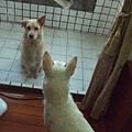 洗完澡,香噴噴。DODO跟LUCKY隔門對望