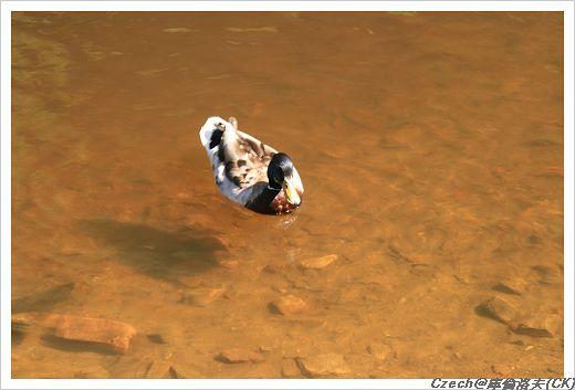 清澈見底的河水