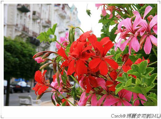 一路上都看到的鮮豔花朵