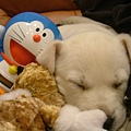 ㄚ多可愛睡覺照