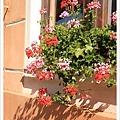 美麗窗台盆花迎著朝陽,歡送我們離開英吉夫。