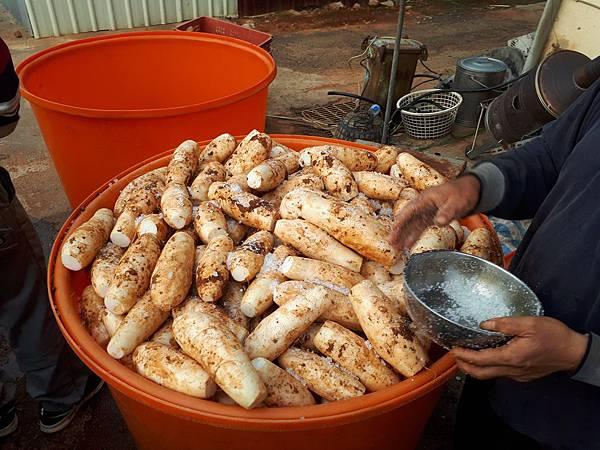 菜脯埕-醃製菜脯選用粗顆粒的天然海鹽
