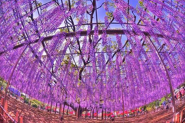 足利花卉公園.jpg