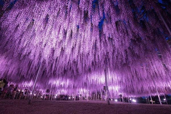 足利花卉公園1.jpg