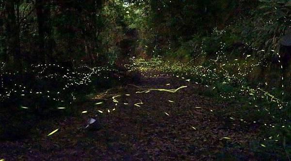 新北-2020坪林螢火蟲季生態觀察課