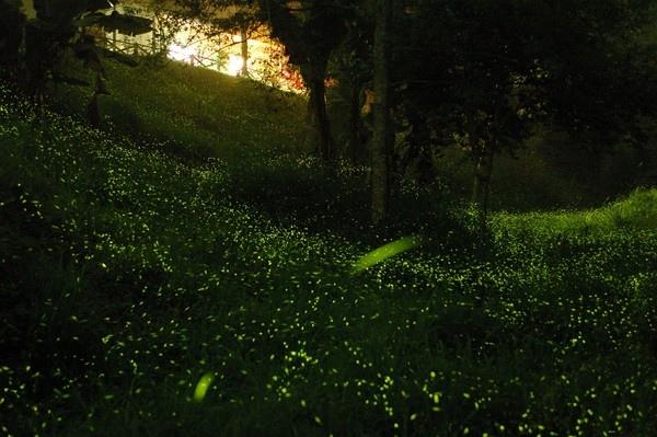 2020奧萬大森林遊樂區