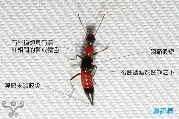 Let's 探索家中昆蟲