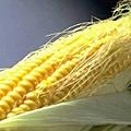 玉米鬚能利尿、利膽、降壓、降血糖