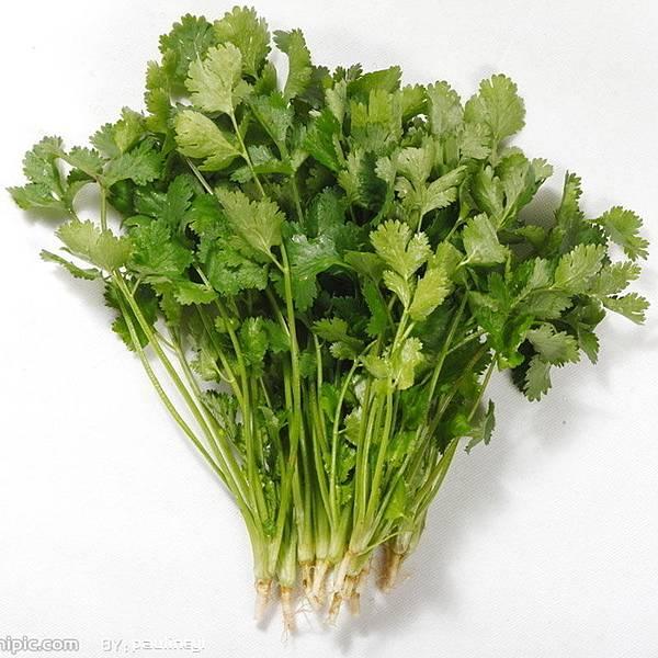 香菜可吸附 水中重金屬物質