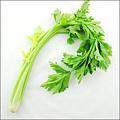 這種蔬菜有6大藥用奇效 你吃了嗎