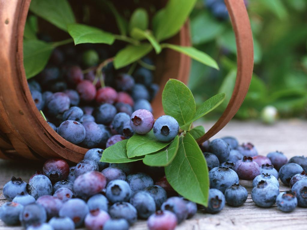 10_藍莓
