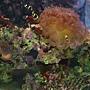 海水缸.jpg