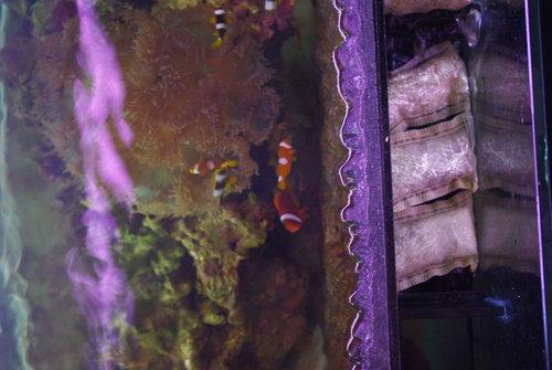 海水缸01.jpg
