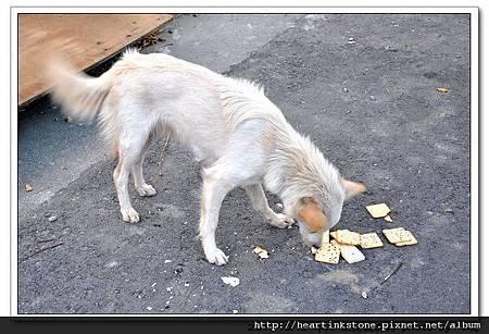 流浪狗的悲歌_4.jpg
