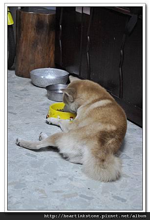 流浪狗的悲歌_7.jpg