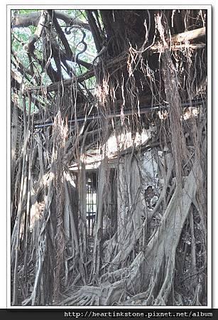 安平樹屋(20101126)46
