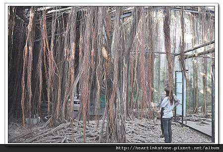 安平樹屋(20101126)47