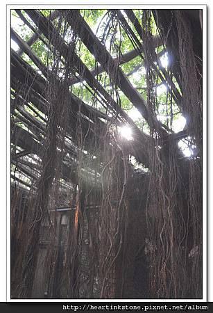 安平樹屋(20101126)50