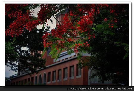 成大榕園隨拍(20100507)1
