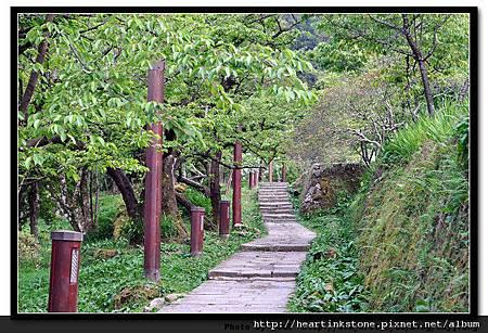 阿里山-風景1