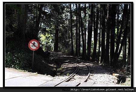 阿里山-鐵道3