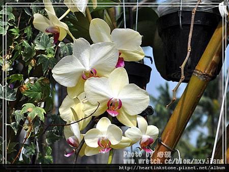 2010府城賞花季4