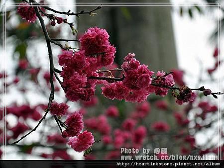 2010春節記實(四1