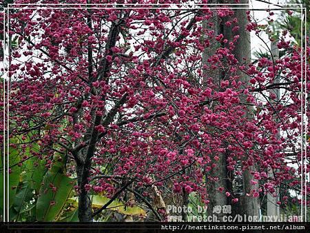 2010春節記實(四5