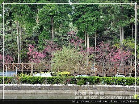 2010春節記實(四11