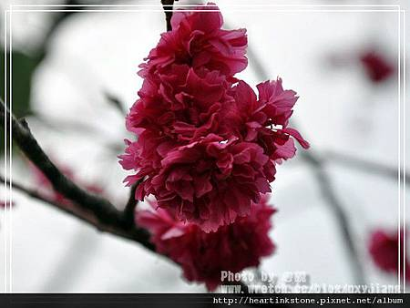 2010春節記實(四14