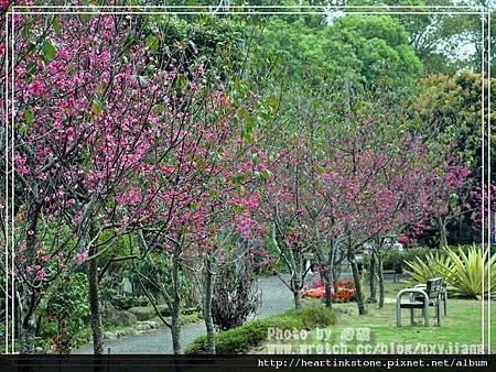 2010春節記實(四15