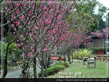2010春節記實(四18