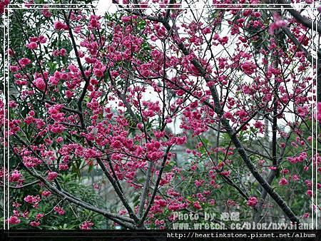 2010春節記實(四21